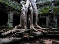 Amazing Ta Prohm Tomb Raider Temple, Cambodia / Architecture