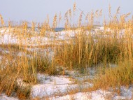Dunes at Dawn, Destin, Florida / Beaches