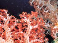 Under sea / Corals