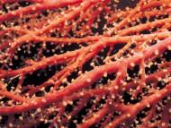 Orange / Corals