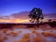 Joshua Tree Sunset, Mojave Desert, California / Deserts