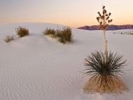 White Sands at Sunrise, New Mexico / Deserts