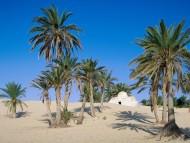 Near Douz, Sahara Desert, Tunisia / Deserts