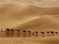 Camel Caravan, Libya / Deserts