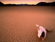 Bone Dry, Death Valley, California / Deserts