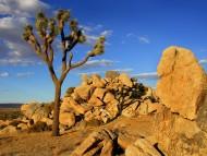 Joshua Tree, Mojave Desert, Littlerock, California / Deserts