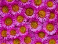 Flowers / Nature