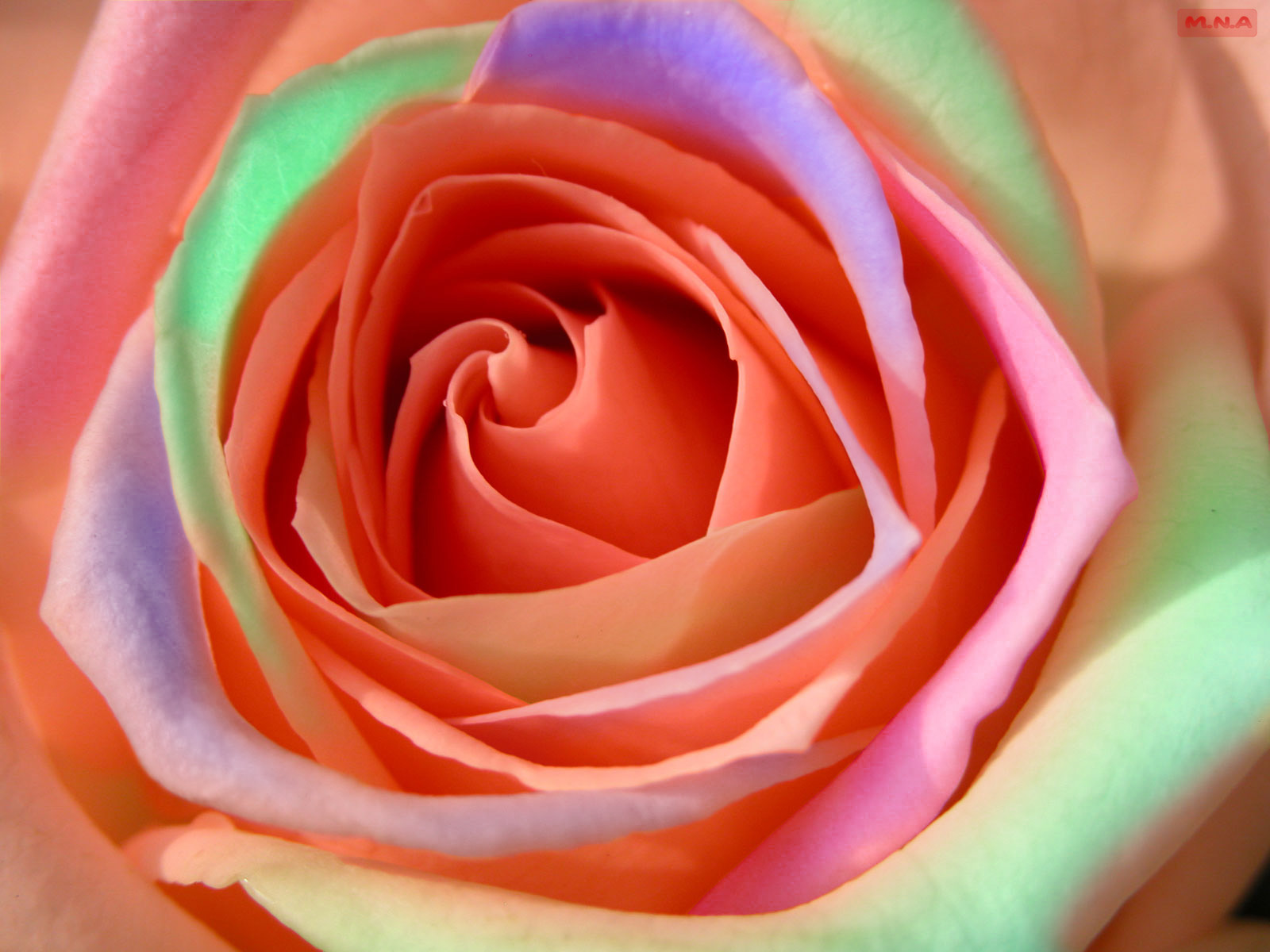 Colorful Flower Wallpaper Designs. Top Cc Color Heart Flower ...