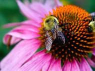 Bee / Flowers