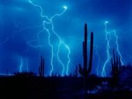 Desert Strike / Forces of Nature