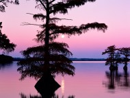 Bald Cyprus Trees, Reelfoot Lake, Tennessee, Dusk / Lakes