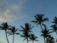 Palms / Nature