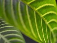 TigerLea / Plants