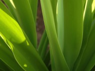 Plants / Nature