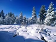 Snow / Nature