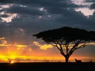 Sunset / Nature