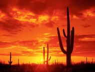 Burning Sunset, Saguaro National Park. Arizona / Sunset
