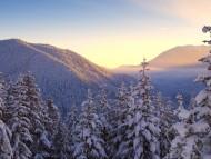 Winter / Nature