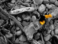 Soft toy on the rocks / Creative Photos