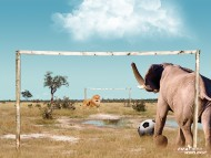 animals play football / Funny