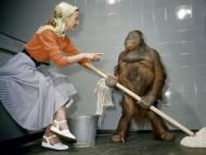 monkey maid / Funny