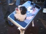 dogfon / Funny