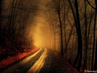 Autumn road / Nature