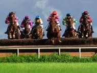 Horse Race / Sports