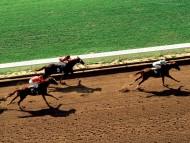 Horse Race / HQ Sports