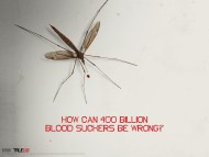 mosquito / True Blood