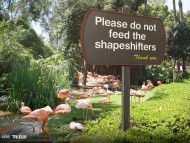 please do not feed the shapeshifters / True Blood