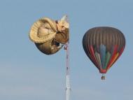 crash / Balloons