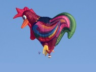 cock, rooster / Balloons
